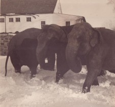 Photo from the Bernard Collection, Hudson River Valley Heritage